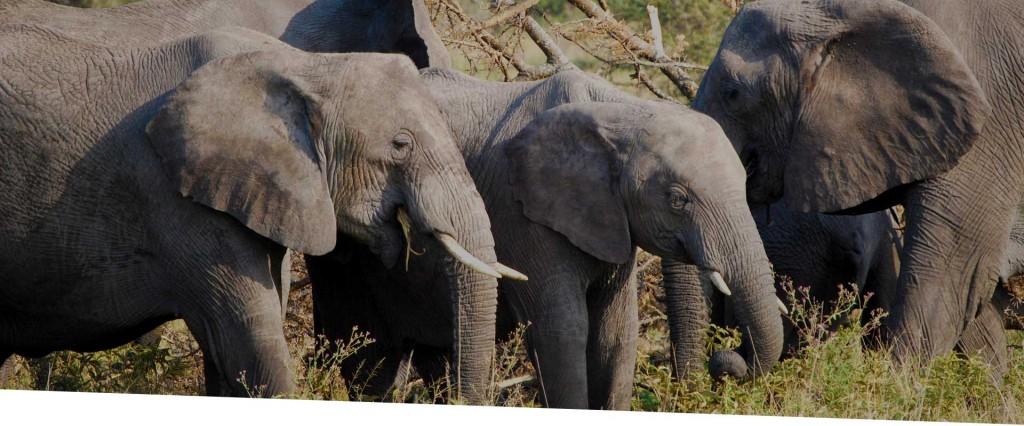 CD_Header-Photos_East-Africa_Nkula