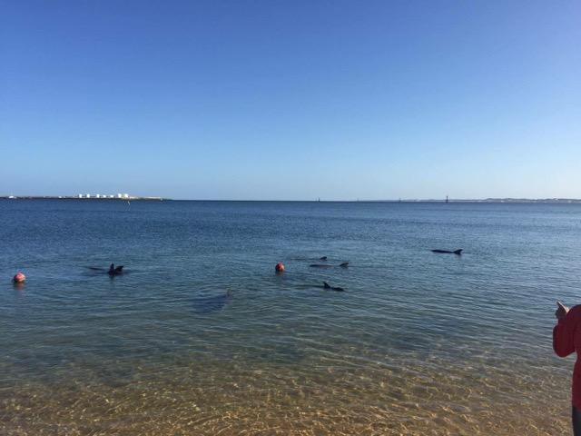 Dolphins in WA! - Carpe Diem Education | International Gap